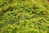 Зеленый мох мне мне здоровым стать помог!