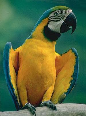 Все о попугаях